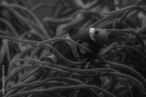 Fotografie, Tablou  Nemo B/W