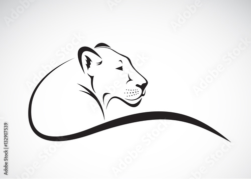 Fototapeta Vector of a lion female design on white background, Wild Animals.