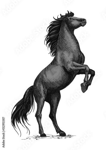Photo  Rearing black horse sketch for equine sport design