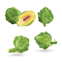 Artichoke Green Flower Heads Isolated. Vector Illustration Of Edible Vegetable