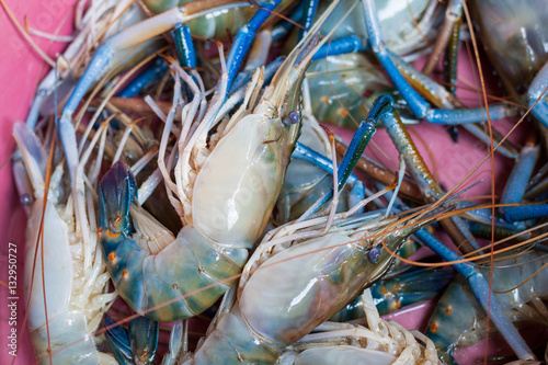 Giant Freshwater Prawn, Fresh shrimp - Buy this stock photo