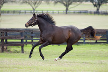 Beautiful Thoroughbred Horse I...