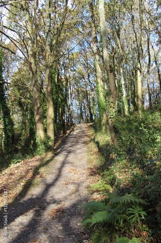 Tuinposter Weg in bos Chemin en forêt au début de l'hiver