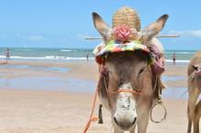 Animal De Praia