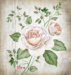 Fototapeta Róże Watercolor vintage tea roses on wooden background