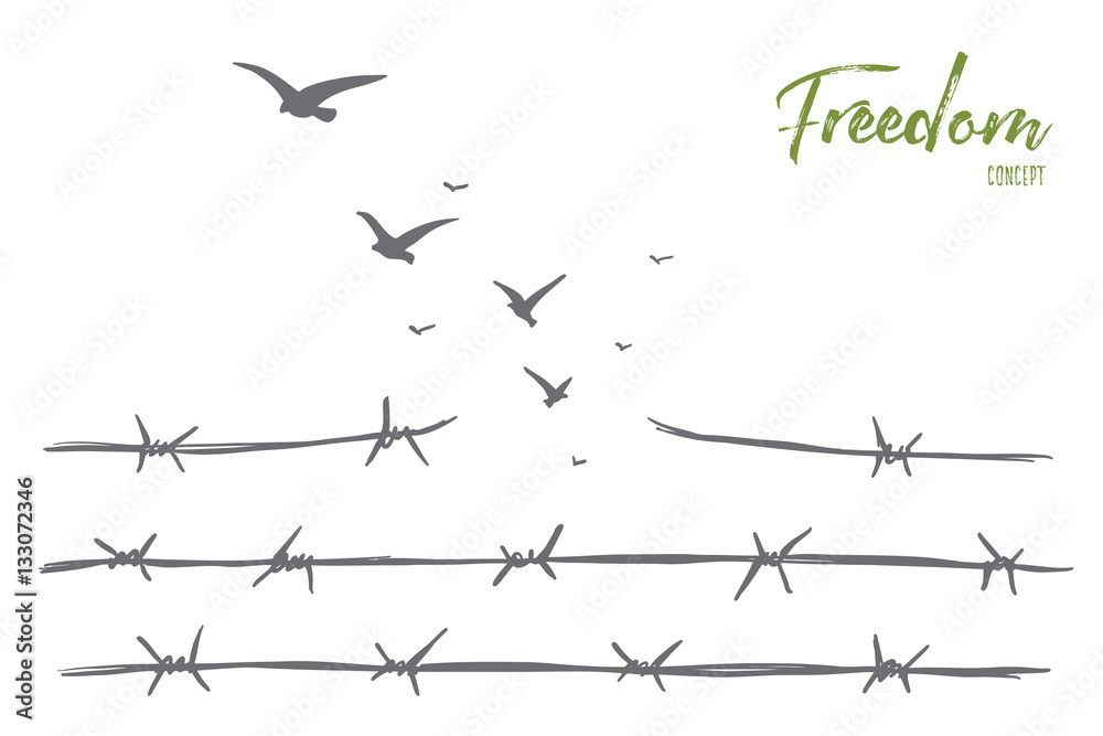 Fototapeta Vector hand drawn freedom concept sketch with broken barbed wire and flock of birds flying over it