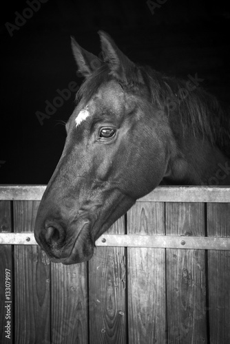 Valokuvatapetti Horse head looking out of his stable, black and white