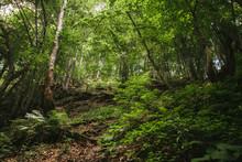 Mountain Forest In Carpathians