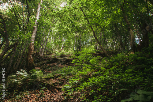 Photo Mountain forest in Carpathians