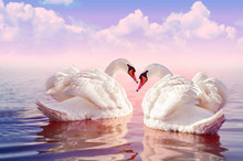 Couple Of Beautiful White Swans In The Foggy Rose Lake At The Sunset With Big Clouds On The Background. Romantic Theme