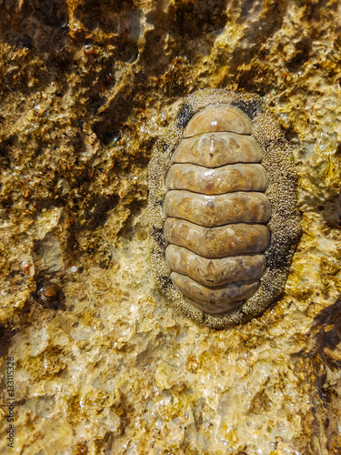 Fotografía  Shellfish adhering to the stone
