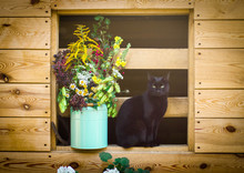 Bouquet Of Herbs. Black Cat.