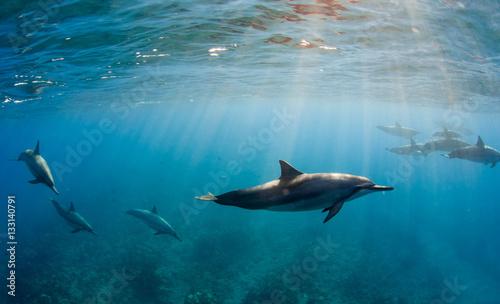 Tuinposter Dolfijn Delfini