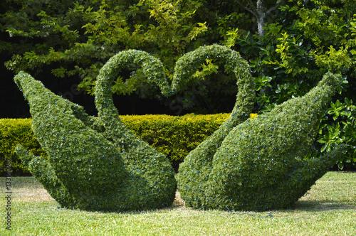 Fototapeta Topiary swans love heart obraz