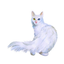 Watercolor Portrait Of Turkish Angora Cat With Odd Eyes Isolated On White Background. Hand Drawn Sweet Home Pet. Bright Colors, Realistic Look. Emerald Eyes. Greeting Card Design. Clip Art. Add Text