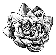 Water Lily Lotus Flower Vintage Woodcut Engraved Etching