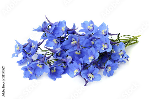 delphinium on a white background Fototapet