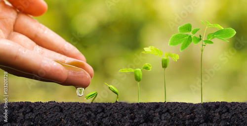 Staande foto Planten Agriculture. Plant seedling. Hand nurturing and watering young baby plants growing in germination sequence on fertile soil with natural green background