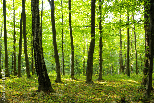 Papiers peints Forets green forest