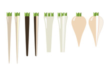 The Rhizomes And Roots, The Rhizomes And Roots: Horseradish, Salsify Meadow, Black Salsify And Parsnip. General View And In Section, On A White Background