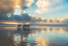 Horses Walking On The Beach At...