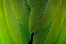 Green Feather Background.