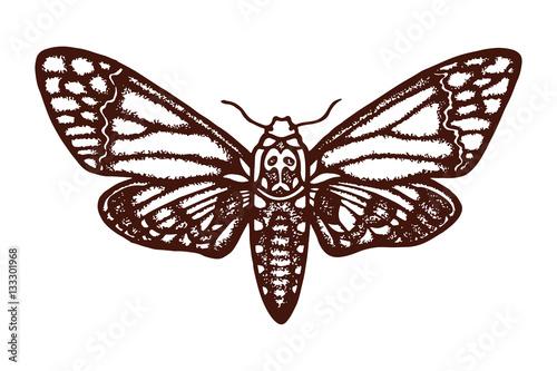 Smerinthus ocellatus Canvas Print