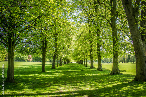 Trees in Marbury Park near Northwich Cheshire UK Fotobehang