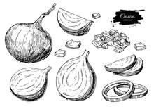 Onion Hand Drawn Vector Set. F...