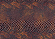 reptile skin surface
