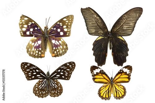 бабочка, коллекция бабочек на белом фоне изолированных Canvas