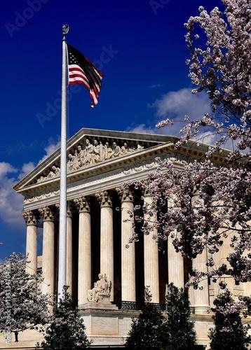 Fotografia  Washington, DC -  April9, 2014::  Flowering cherry trees frame the neo-classical