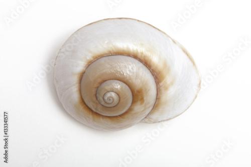 A moon shell