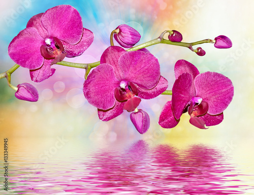 Staande foto Roze Colorful bright orchid flowers on a background of the summer lan