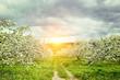 Leinwanddruck Bild Apple orchard in springtime