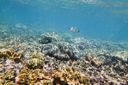 Fotografie, Tablou  QE Corals 1 fish