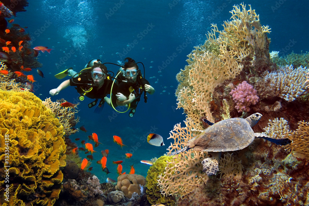 Fototapeta The loving couple dives among corals and fishes in the ocean