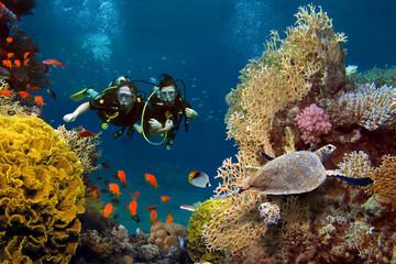 Zaljubljeni par roni među koraljima i ribama u oceanu