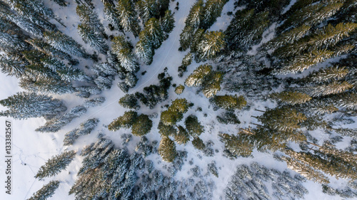Valokuva  Aerial view of winter forest.