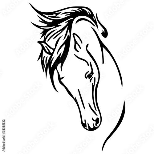Obraz na plátně  cavallo