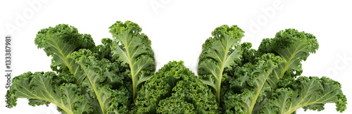 Poster Fresh vegetables Green leafy kale vegetable