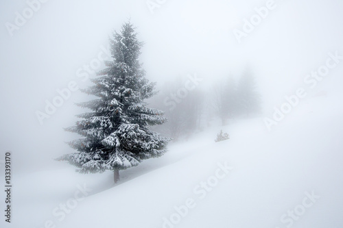 Poster Blanc Mystical winter forest covered with snow on cloudy day