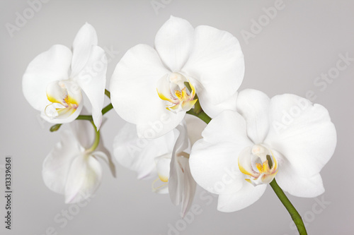 Foto op Canvas Orchidee The branch of white orchid