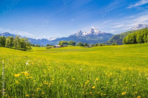 Tuinposter Landschappen Idyllic landscape in the Alps with blooming meadows in summer