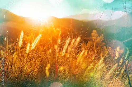 Sunny meadow #133404326