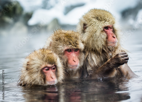 Foto op Plexiglas Aap Group of Japanese macaques sitting in water in a hot spring. Japan. Nagano. Jigokudani Monkey Park. An excellent illustration.