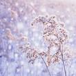 Zima w pastelowych kolorach - śnieżny poranek, szron