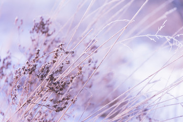 FototapetaZima w pastelowych kolorach - śnieżny poranek, szron