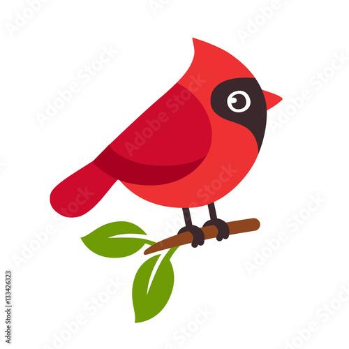 Photo  Red cardinal bird