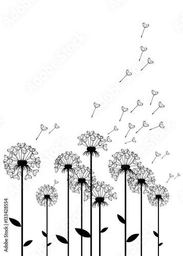 dandelion, vector, background, botany, flower, blossom, fluffy